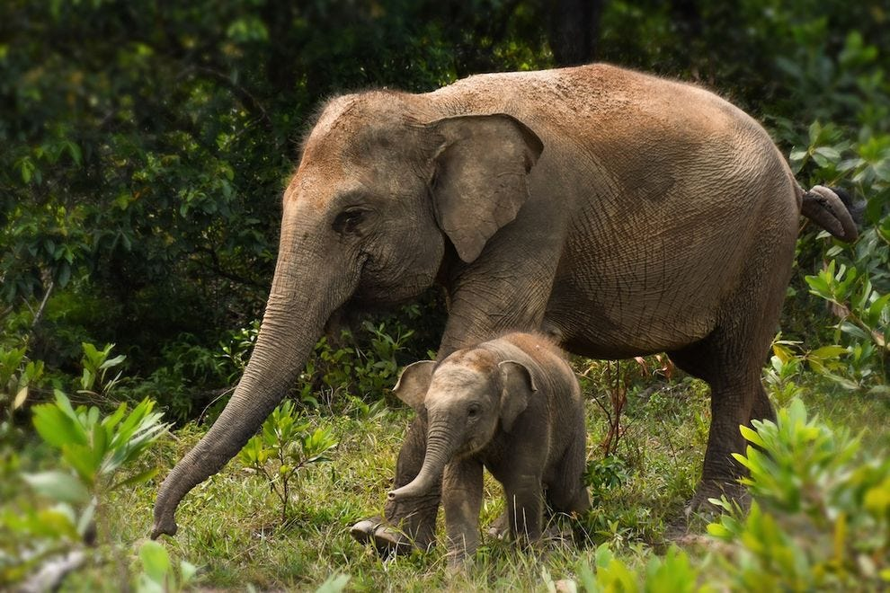How cute are these mother and baby elephants at BNWS?