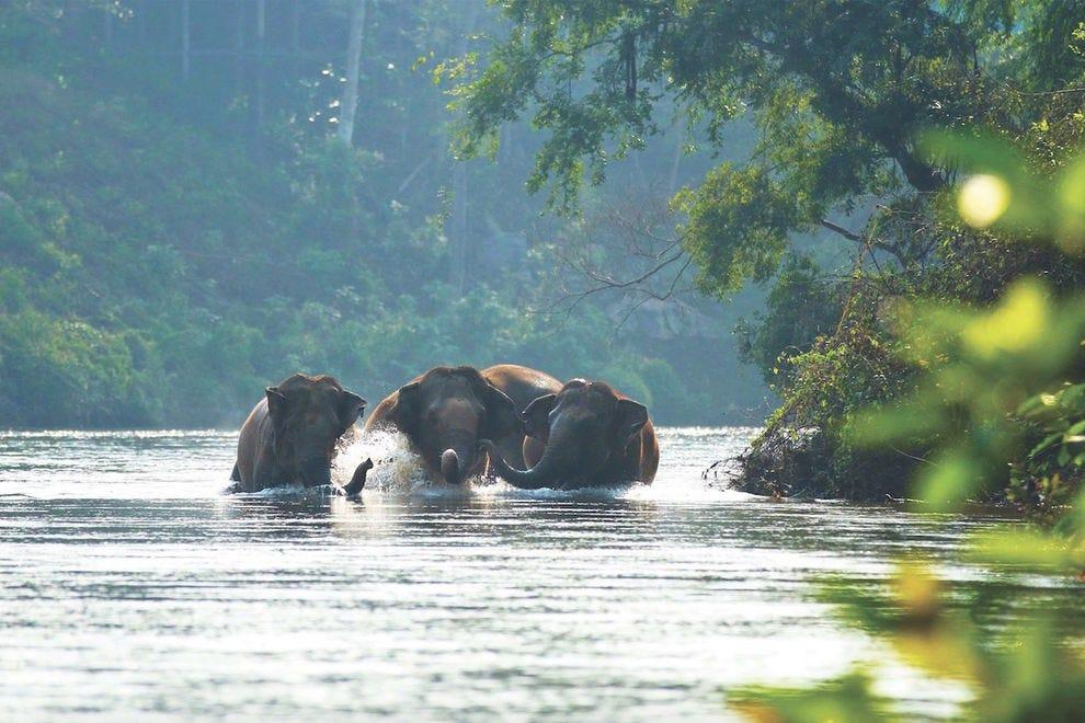 It's a joy to watch the elephants bathe at Elephant Haven Thailand