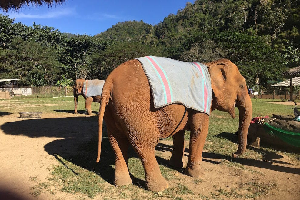 Older elephants are warmed by blankets and lots of love