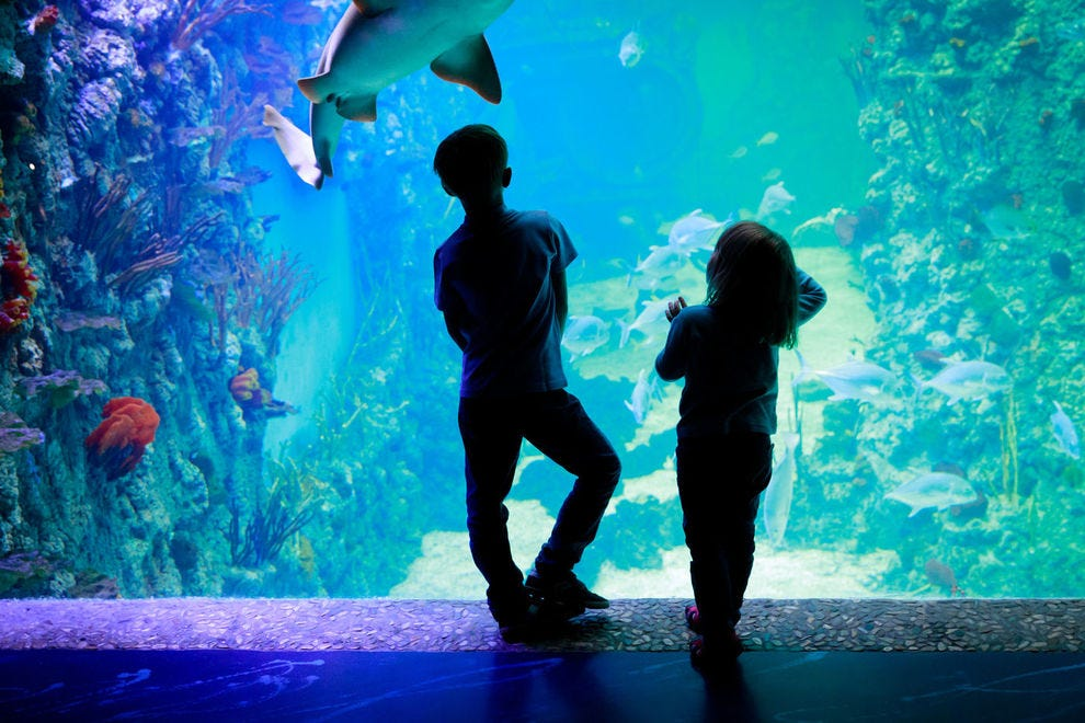 Go under the sea at these top facilities