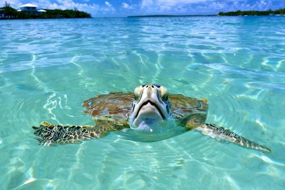 Voted Best Caribbean Island for Romance, Green Turtle Cay in the Bahamas is home to magnificent sea turtles