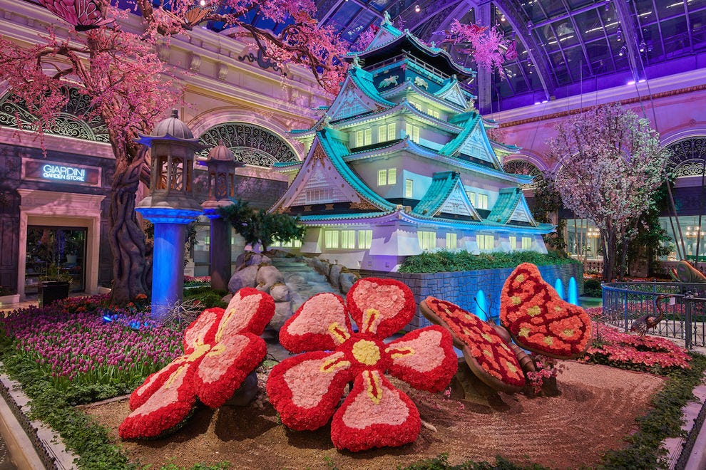 The Conservatory pays tribute to Japan in its spring display