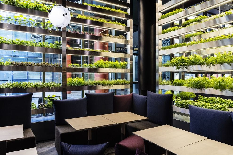 Ultima's living wall of homegrown produce