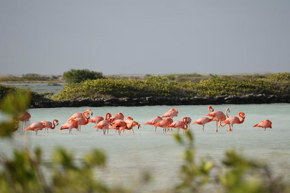 The salt ponds of Bonaire in the southern Caribbean attract flamingos.