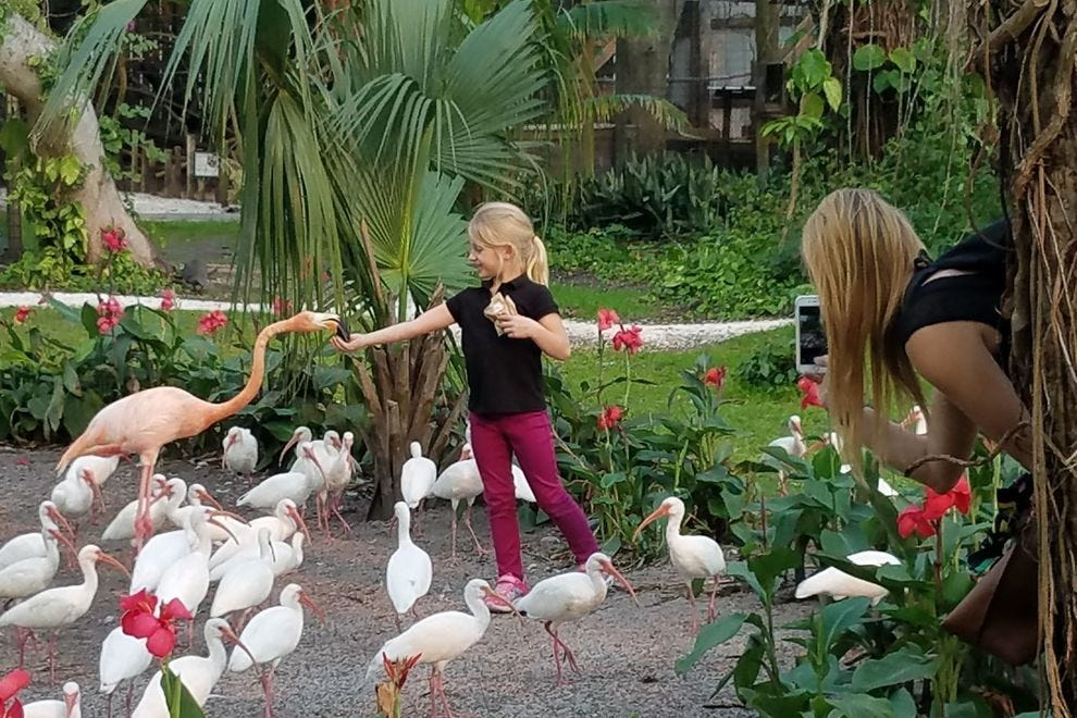 Hand feed the flamingos at Everglades Wonder Gardens or schedule yoga in their midst.