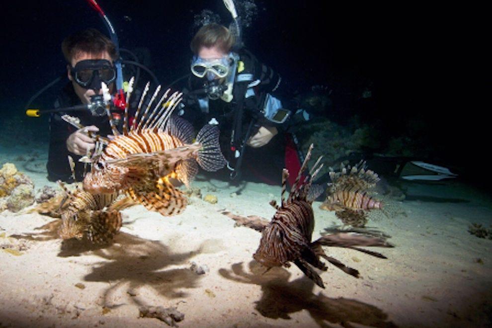 Aruba Scuba Diving and Snorkeling: 10Best Aruba Scuba Reviews