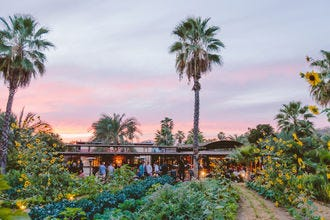 Farm to Fork Feasts: The Best Restaurants in San Jose del Cabo