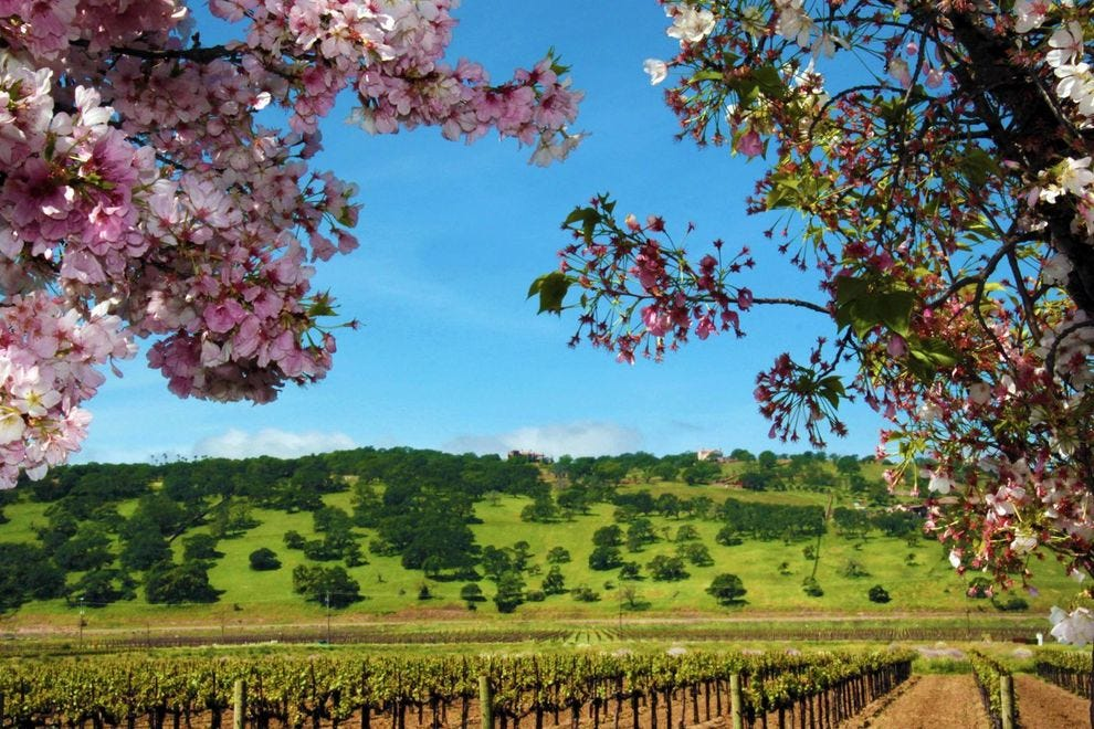 Why you need to explore Suisun Valley, undiscovered wine country