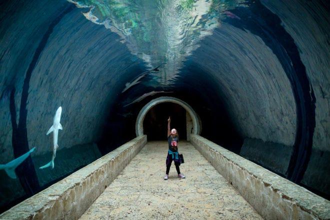 Dallas World Aquarium: Dallas Attractions Review - 10Best