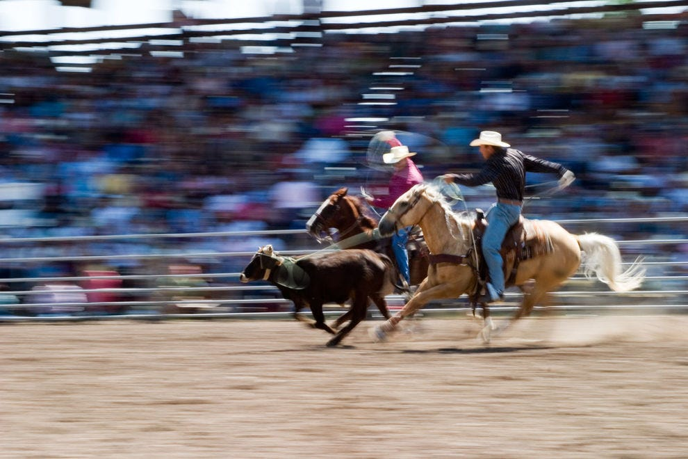 Rodeo cowgirls and cowboys compete in several events related to cattle herding