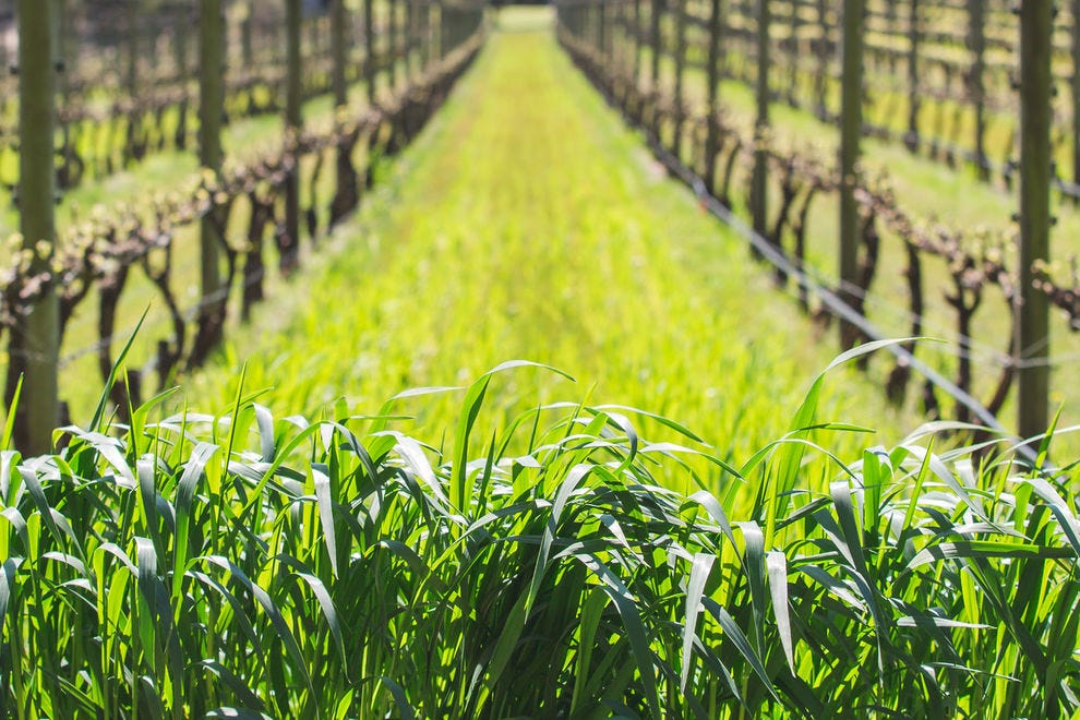Growing cover crop