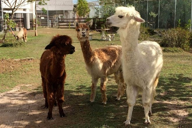 Children's Animal Park (Petting Zoo): Key West Attractions