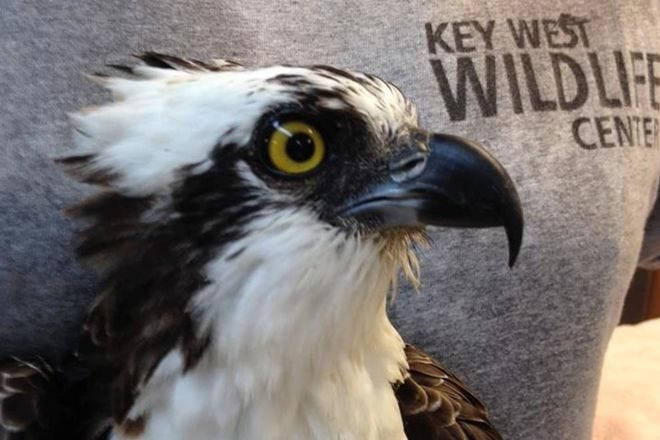 Key West Wildlife Center
