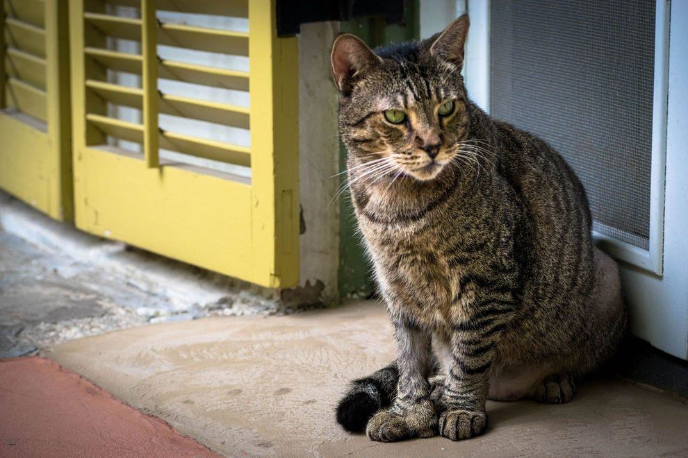 Hemingway's cats | Key West