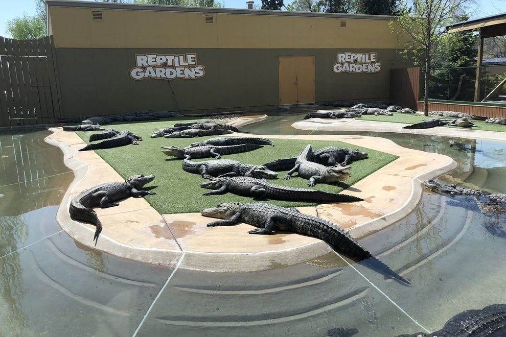 This is the largest reptile zoo in the world