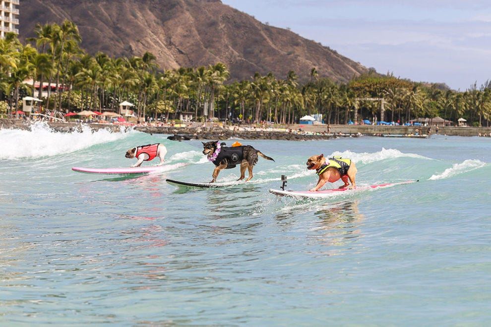 3 dogs take to the waves at Duke's OceanFest