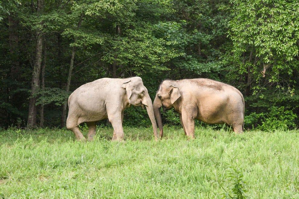10 amazing animal sanctuaries in the U.S.