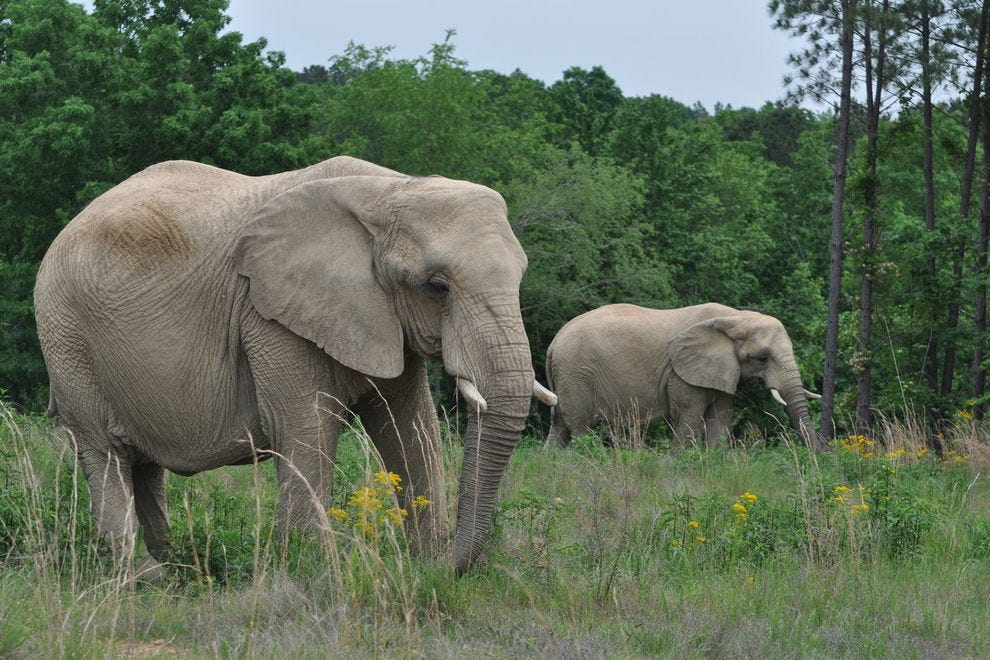 10 amazing animal sanctuaries in the U S  that you need to visit