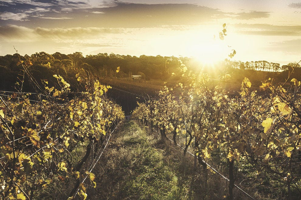 Sunshine over vineyards in south Australia