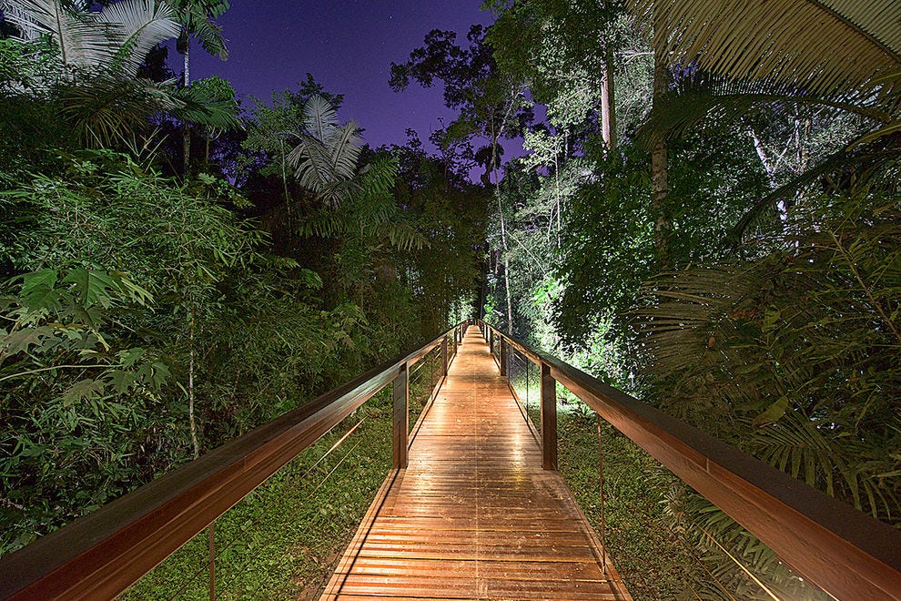 Lit boardwalks in the rainforest, perfect for night viewing