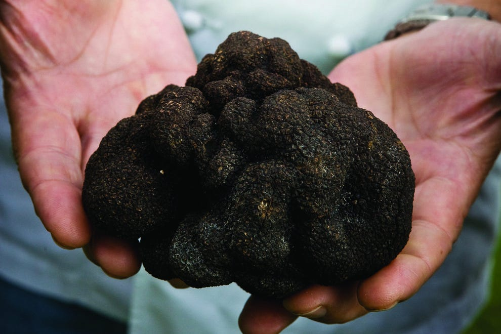 Winter truffles have arrived