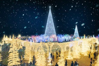 Holiday happenings that illuminate Seattle, making the season merry and bright