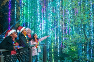 Vote for the Best Botanical Garden Holiday Lights!