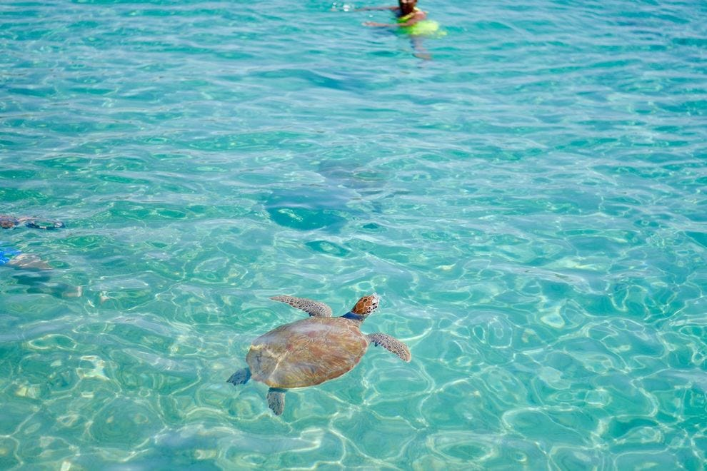 A sea turtle in Curacao