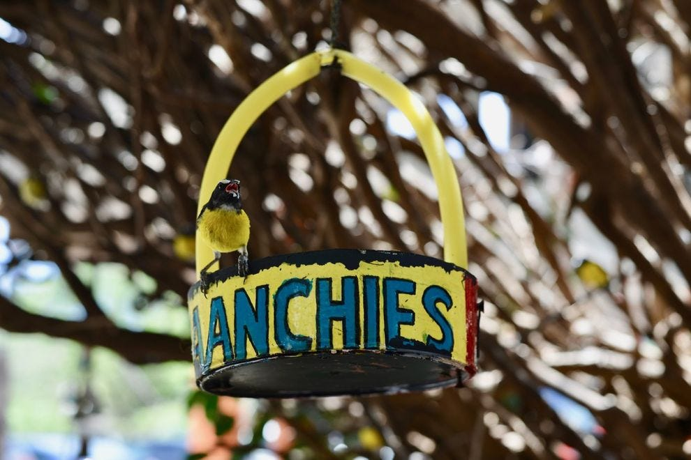 Ask for a table by the open windows at Jaanchie's to watch the birds flit between hanging bowls of sugar