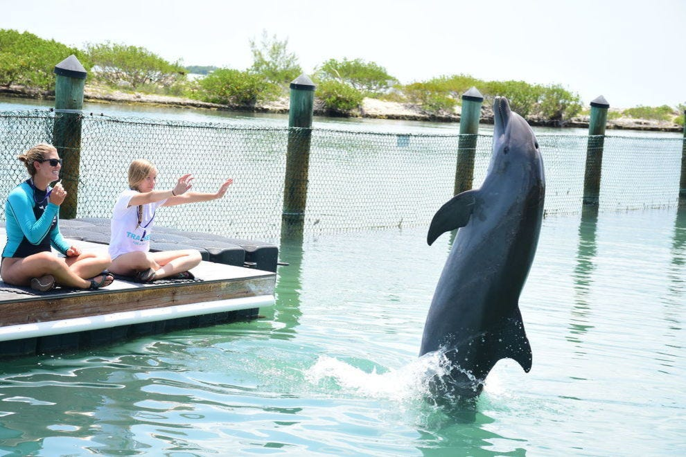 Work alongside a dolphin trainer at Hawks Cay