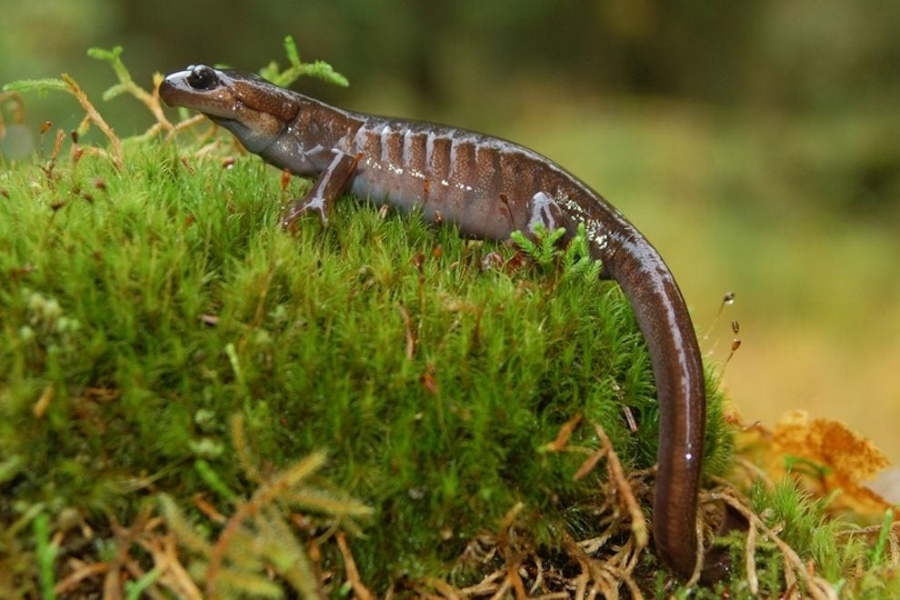 Salamanders are just one of the species that calls this park home