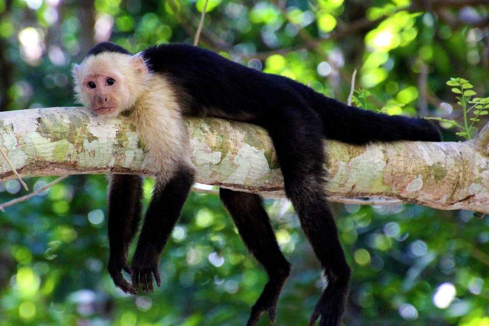Traverse deep into the jungles of Costa Rica