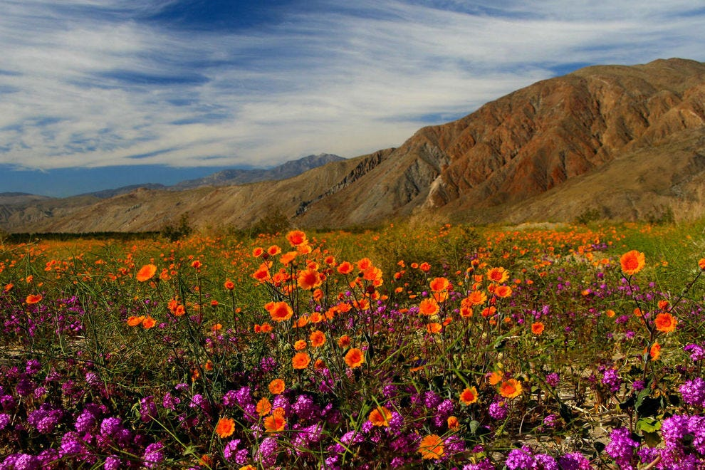 Super bloom from years past