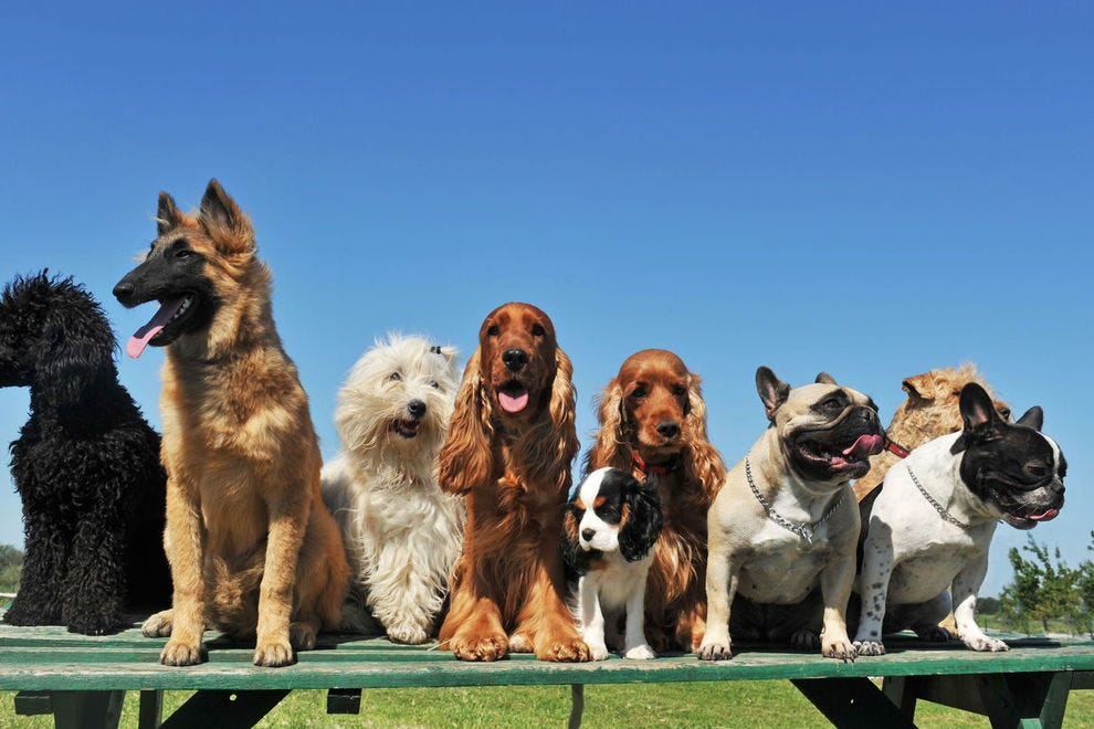 Assortment of dog breeds