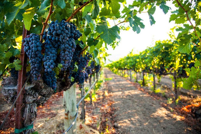 Vote for the best of American wine country