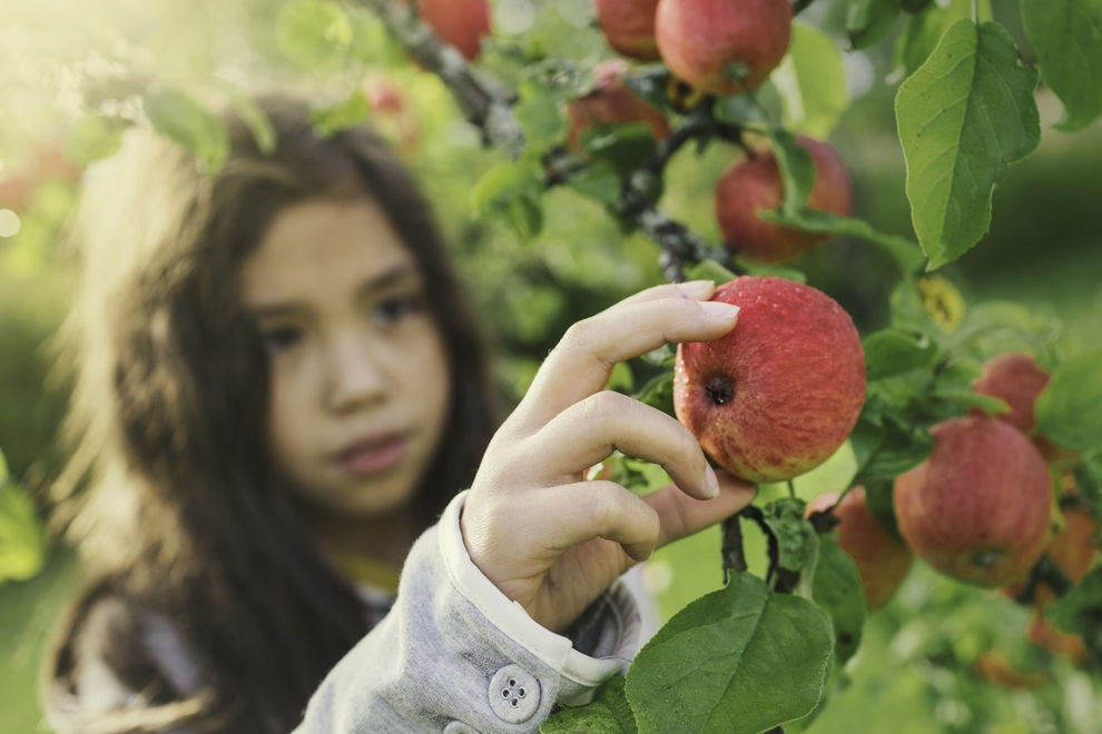 Pick your own produce at these orchards