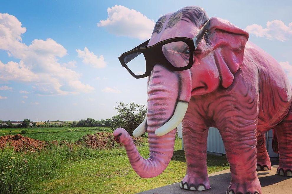 Pinkie the Pink Elephant
