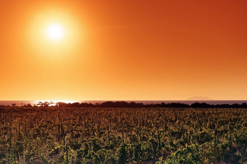 Vineyards on the coast of Corsica