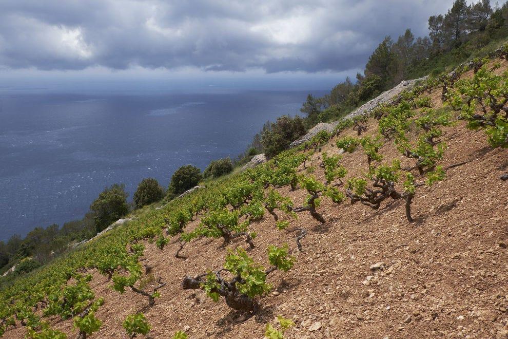 Waterfront vineyard on Hvar