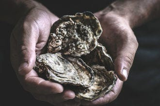 Oysters are okay to eat for some vegans – here's why