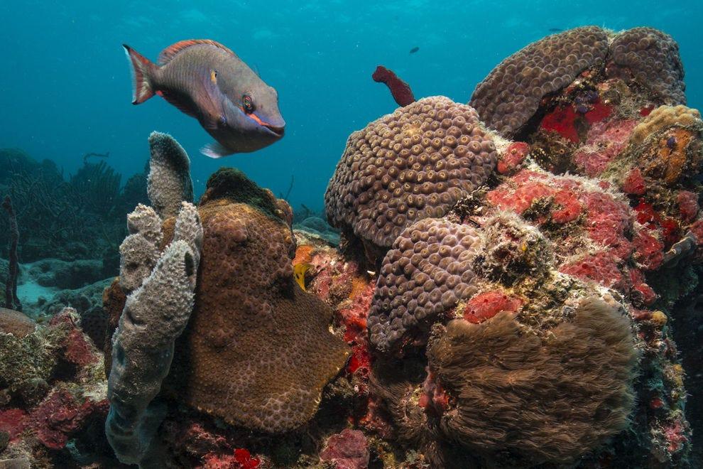 Colorful reef underwater