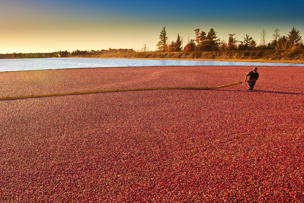 Wisconsin's cranberry harvest is quite possibly one of the most beautiful harvests to witness in the United States