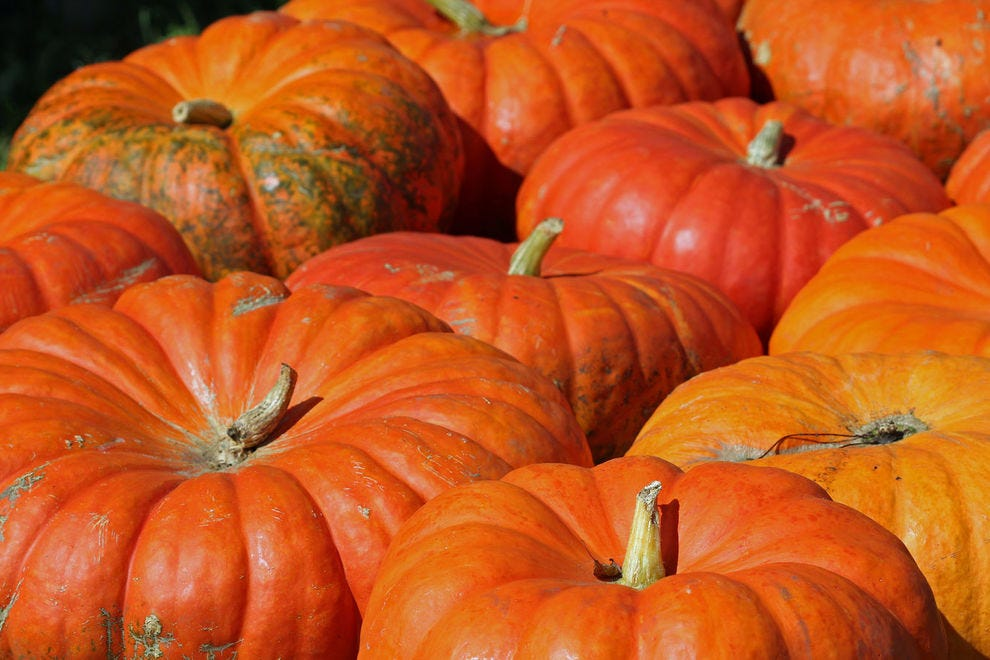 Cinderella pumpkins have a higher water content than other pumpkin varieties