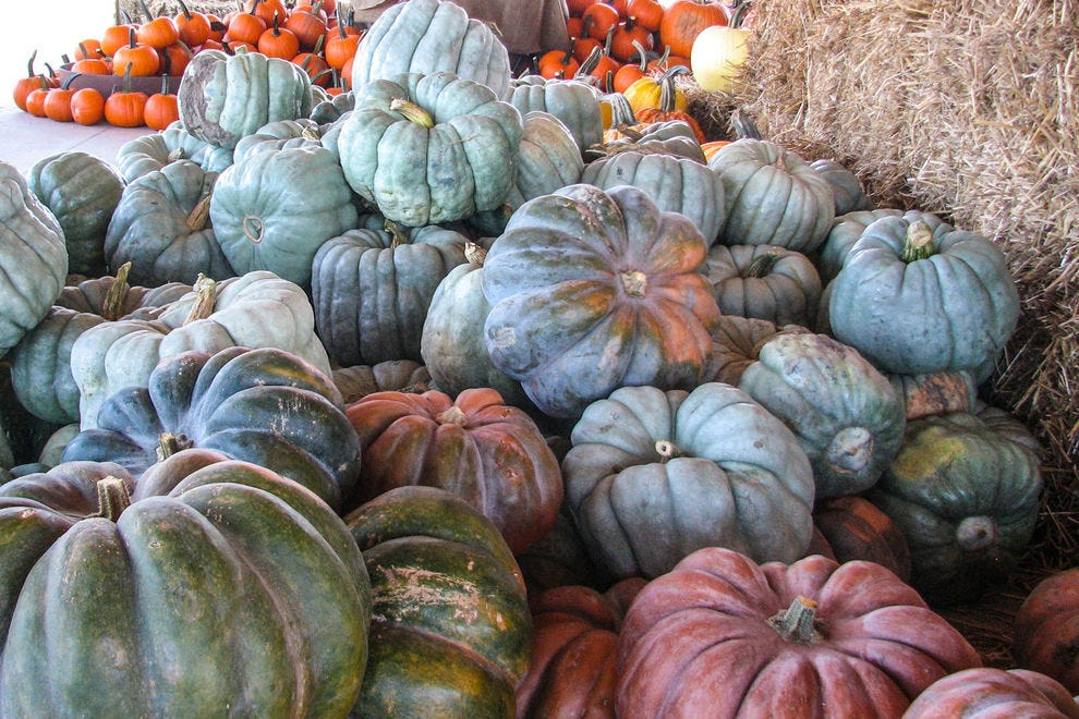 Jarrahdale pumpkins can be used for decoration or for eating