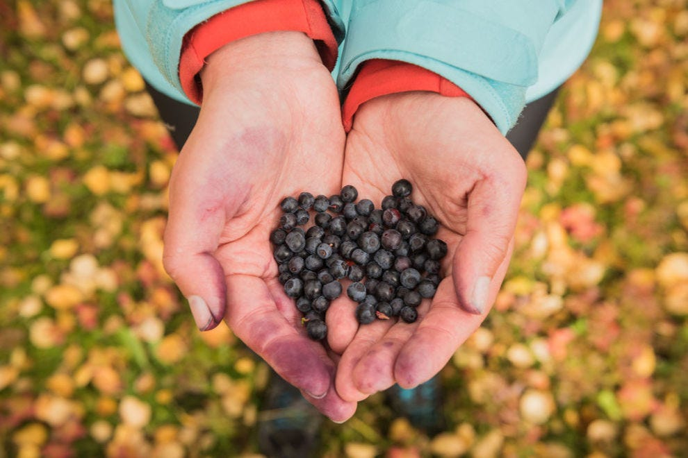 Blueberries from Sweden