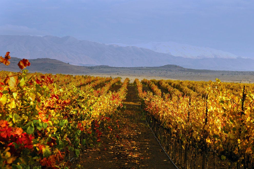 Wine country in Israel