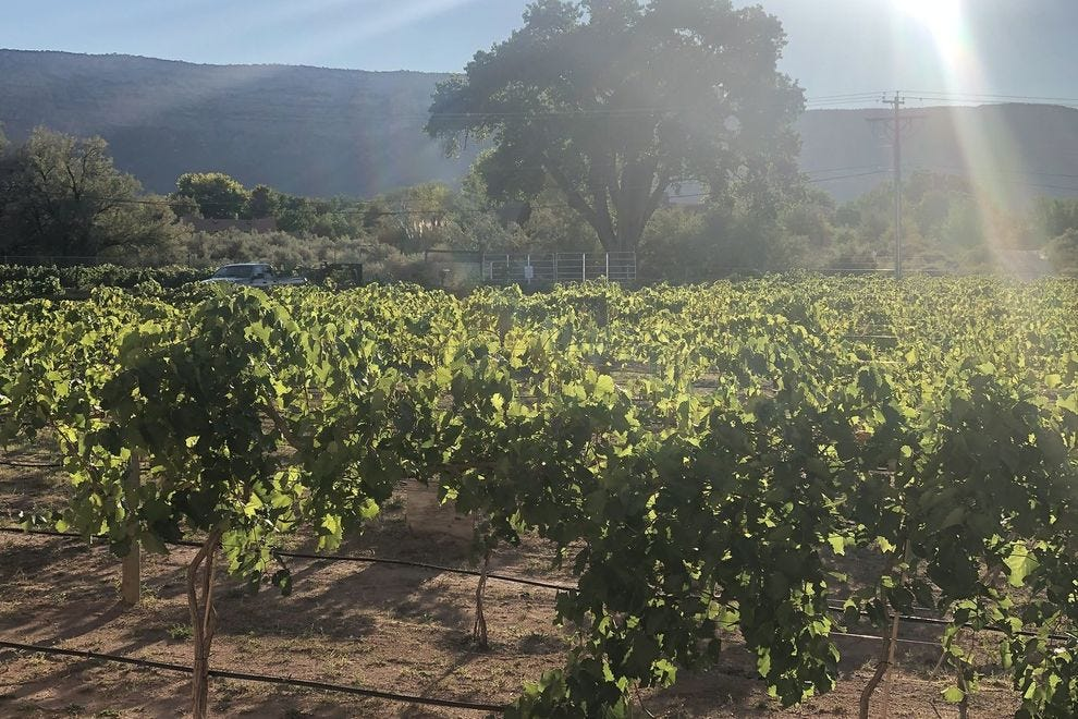 A view of the grapes at the Two Rivers Winery in Grand Junction