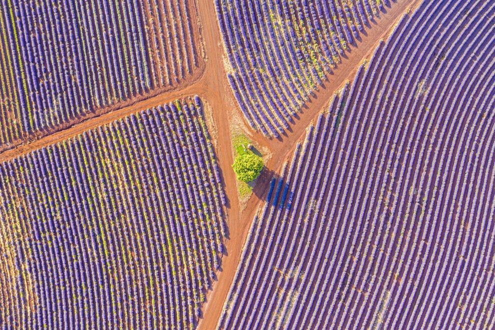 Aerial of Bridestowe Lavender Estate