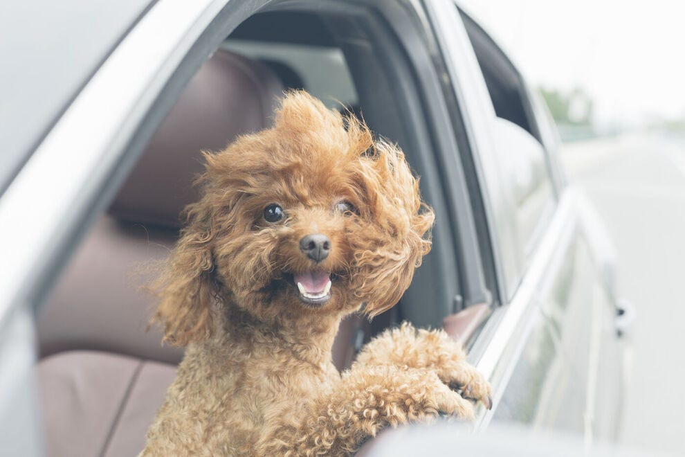 Headed to Florida with your pet? Stay at these great pet-friendly hotels