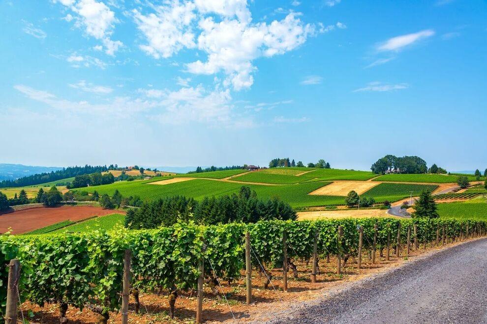 Vote for your favorite wine region